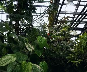 art, beautiful, and greenhouse image