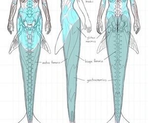 mermaid, anatomy, and drawing image