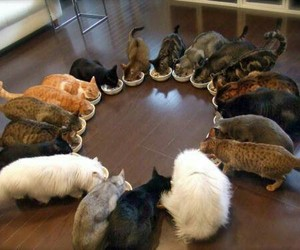 animal, cats, and pets image