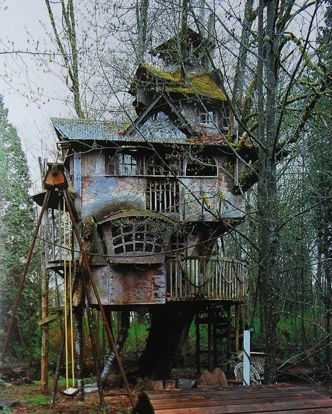 house, treehouse, and tree image
