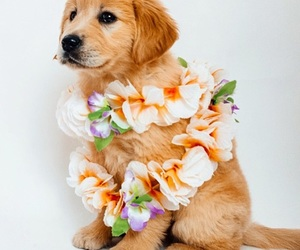 dog and flowers image