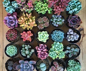 flowers, succulent, and colorful image