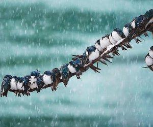 birds, nature, and season image