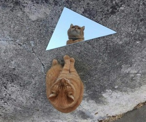 cat, mirror, and grunge image