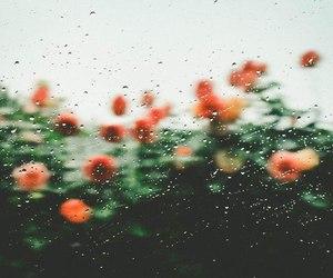 flowers, rain, and nature image