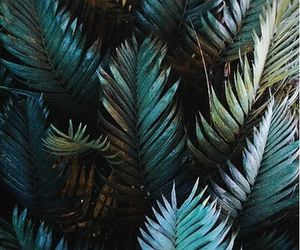 botanical, summer, and tropical leaves image