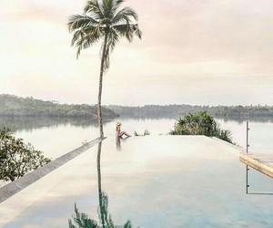 palms and paradise image