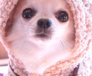 animals, baby dog, and fashionable image