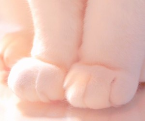 paws, animal, and cat image