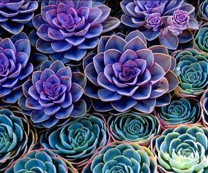 flowers, purple, and plants image