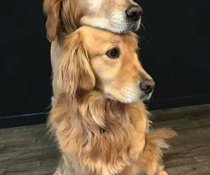 cuddle, dog, and dogs image