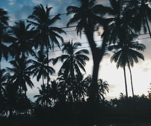 nature, palm trees, and photography image