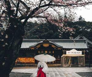 japan, beauty, and sakura image