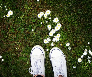 flower, shoes, and white image