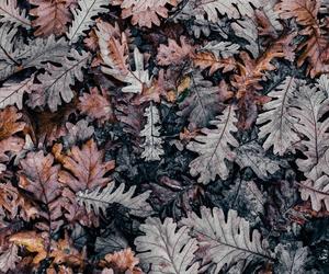 art, photo, and autumn image