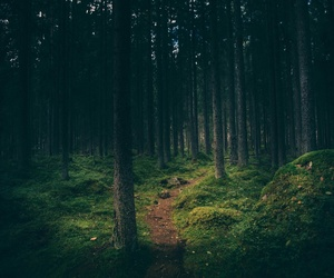 art, forest, and green image