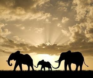 elephant, animal, and family image
