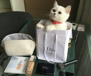 cat, girl, and luxury image
