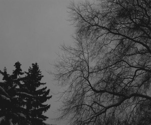 alternative, nature, and black and white image