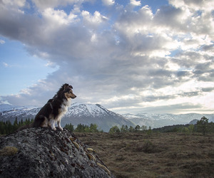 adventure, explore, and dog image