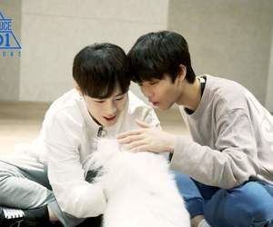 bae, jinyoung, and ha image
