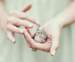bird, hands, and 🐦 image