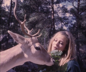 1960s, animals, and deer image