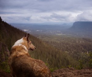 collie, hiking, and photography image