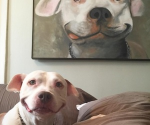 dog, photography, and happy image