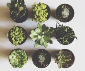 aesthetic, cactus, and alternative image