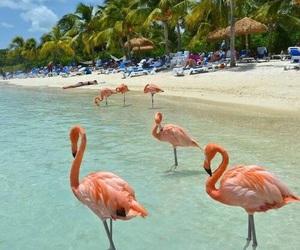 beach, flamingos, and summer image