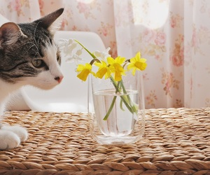 cat, kitty, and spring image