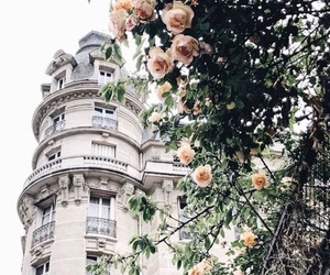 rose, beautiful, and city image