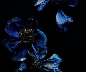 blue, dark, and nature image