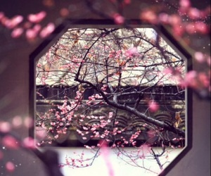 aesthetic, beautiful, and cherry blossoms image
