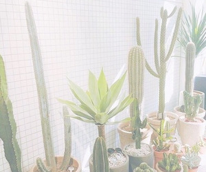 cactus, green, and pastel image