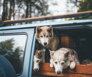 dog, animal, and car image