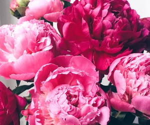 beauty, flowers, and peonies image