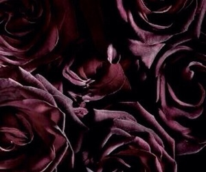 rose, theme, and dark image