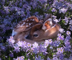 purple, wallpaper, and babyanimals image