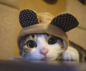 animals, ears, and hats image