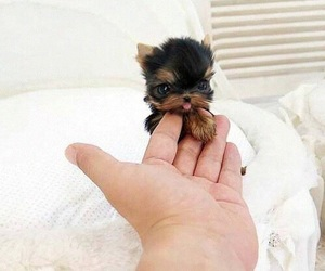 adorable, colors, and pets image