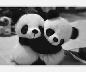 panda, black, and white image