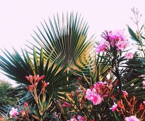 flowers, tropical, and pink image