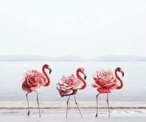 flamingo, art, and animal image