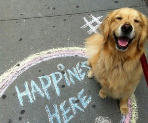 adorable, animals, and happy image