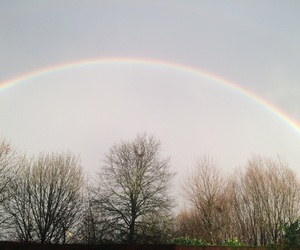 rainbow, trees, and bomen image