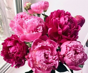flouers, pink floüers, and peponies image
