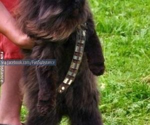 chewbacca, cat, and star wars image