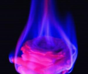 burn, flor, and rosa image